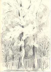 trees in Friedrichshain, Berlin (JENS01) Tags: zeichnung kohle papier bleistift drawing sketching painting malerei skizze sketchbook art kunst graphite pencildrawing paperwork urban doodle l oil tusche portrait