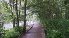 Summer Stroll / Azusa river bank (maco-nonchR) Tags: kamikochi stroll stolling rain river bank nagano  azusa green woods foggy path summer august vacation holidays travel  manual allmanual