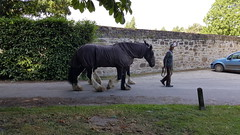 Erddig - National Trust (National Trust Omega signs) Tags: nationaltrust nationaltrustmember nationaltrustwales erddig countryhouse wrexham garden shire horse