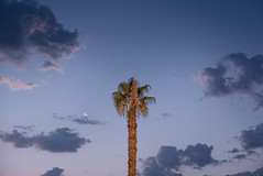 Le Palmier. (Matthieu Robinet Photography) Tags: travel palmtree summer morning aube blue violetsky clouds soft 5am voyage holiday centered symetry light douceur photography lumixlx100 compact