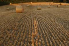 Harvest (Henry Hemming) Tags: haybales corn golden autumn harvest hot straw farm farmer land sunset lines patterns circles rows