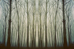 Wherever you go, somebody else goes there too (Moesko Photography) Tags: analogue nikon nikonl35af symmetry geometry trees wood forest nature outdoor winter morning mist abstract