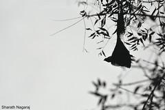 info@sharath  (13) (sharathphotography) Tags: photo photos pic pics picture photographer pictures snapshot art beautiful instagood picoftheday photooftheday color allshots exposure composition focus capture moment photoshoot photodaily photogram nature animals wild animal wildlifephotography bird travel naturelovers love birds photography outdoors adventure instanature cute landscape naturephotography naturelover summer forest africa canon nikon natgeo macro gethashtagscom