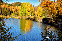 My Heart, My Home ... C O L O R A D O (Aspenbreeze) Tags: grandmesa coloradograndmesa colorado autumn aspentrees aspens water reflection lake fallsaason seasonas rural country mountains trees bevzuerlein aspenbreeze moonandbackphotography