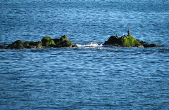 (wendyforbes) Tags: coast water rocks elie fife