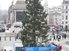 Christmas tree... (mag2003...) Tags: christmas people tree london oslo norway square lights trafalgar norwegian