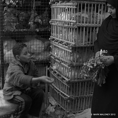 buy my chickens (community brother a.k.a Mark Maloney) Tags: world life street b people urban blackandwhite bw woman white black chickens chicken byn children photography photo community child market candid muslim w egypt streetshots streetphotography photojournalism streetlife streetscene egyptian streetphoto luxor journalism streetcandid blackwhitephotos communitybrother