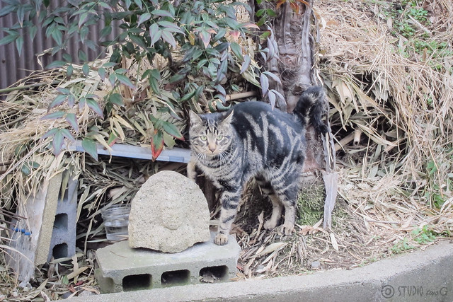 Today's Cat@2012-12-23