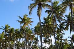 bavaro (roberta zouain) Tags: republica travel vacation canon dominican republic punta dominicana caribbean cana ferias caribe barcelo bavaro t4i
