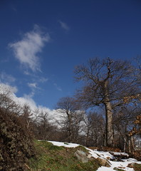 châtaigneraie8 (bulbocode909) Tags: automne suisse arbres neige nuages valais mfcc châtaigneraies