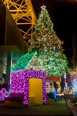 Tokyo Tower Illumination 2012 (Tokyo Tower, Japan) (t-mizo) Tags: christmas xmas light japan night tokyo illumination sigma  tokyotower  shiba   lr foveon lightroom   shibakoen shibakouen dp2    lr4 lightroom4