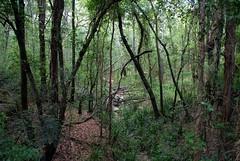 Unnamed creek,Bungawalbyn Forest (dustaway) Tags: plants nature creek countryside scenery australia nsw treebark australianlandscape northernrivers creekscape streamscape riparianarf afternoonlandscape depauperaterainforest bungawalbinnationalpark bungawalbincatchment