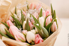 Pretty Tulips (Paris in Four Months) Tags: flowers tulips bouquet