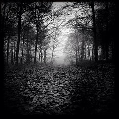 Drab (DZine_) Tags: trees sky blackandwhite bw nature leaves fog forest woodland square landscape mono woods noir foggy foliage squareformat noedit hertfordshire stalbans nofilter top20blackandwhite hipsta johnslens iphoneography iphoneonly hipstamatic blackeyssupergrain instagram instagramapp uploaded:by=instagram chasingfog iphone4s