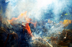 Focus (Isabella Pirastu) Tags: leaves foglie fire fuoco