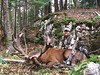 Quebec Elk & Red Stag Hunt 53