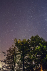 Stargazer (Zagros.os) Tags: trees light sky night lens stars prime minolta pollution 5d konica 28 noise 16mm maxxum