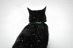 Black & White (davespilbrow) Tags: winter blackandwhite pet cats pets snow cold green ice animal cat blackcat nikon feline pussy coventry collar d90 earlsdon blackfur catinthesnow nikkor18200 backofcat january2013 winter2013