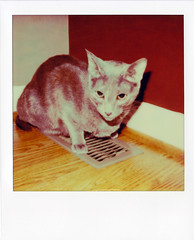 Cold Kitty (Brock5604) Tags: winter pet cold cute film corner cat polaroid vent feline warm sitting floor air kitty indoor heat instant walls impossible