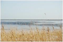 ijs op het Markermeer (20D33675) (Hetwie) Tags: ice gras marken noordholland ijs markermeer ijsvlakte