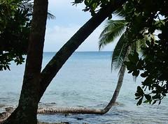 (Almost) Perpendicular Palm (mikecogh) Tags: funafuti tuvalu palm sea shore leaning bent