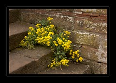 Flowers on the Steps (Audrey A Jackson) Tags: canon60d wightwickmanor nationaltrust garden wall steps nature colour history 1001nightsmagiccity