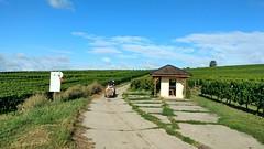 234 Jogging in da vineyards #Rheinhessen (Frank Hamm) Tags: selzen rheinhessen weinberge joggen