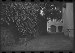 img137 (seeaurora) Tags: canonet adox cms20 film  gtx970   filmisnotdead