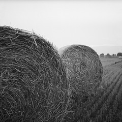 Hay rolls / Szalmablk (brenkee) Tags: hay bale rolls rural scene szalma blk hasselblad 500cm distagon 50mm f4 ilford pan 100 120 film analog discontinued exired bw blackwhite blackandwhite selfdeveloped lc29
