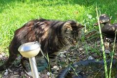 Arme kranke Katze (ute_hartmann) Tags: