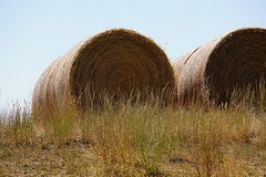 Grass to milk (Let Ideas Compete) Tags: erie co colorado hay bales bale