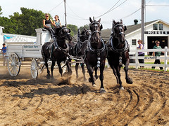 Horse Team Trot (HJharland5) Tags: outdoor horse team trot competition county fair countyfair ohio lakecounty mentor painesville