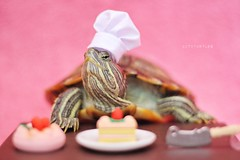 Always trust a chunky hunky baker (City Turtles) Tags: props indoors studio redearedslider adorable baker cake pink nyc flickr dslr canon petphotography photography photo chef animal pet cute turtle
