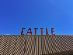 Cowtown (misterbigidea) Tags: sign letters rooftop barn stables red cattle livestock fairground outdoor blue sky corrugated roof herd