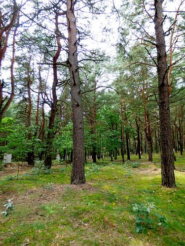 Inowłódz - Russian war cemetery, WWI (9)