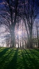 PALE SUN (novaexpress93) Tags: novaexpress93 nature trees sun pale shadows plants