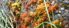 Moss (leyannmeau) Tags: nature natural strathconapark beautiful turtleisland