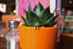 Singing to the Plants (amanda_shirlow) Tags: macro miniature mini micro miniatureworld microworlds microscopic littlepeople lilliput little tinypeople tiny tinyworld preiser photography people pun canon