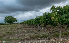Avant l'orage ! (Roudoudou17) Tags: charentemaritime vignes