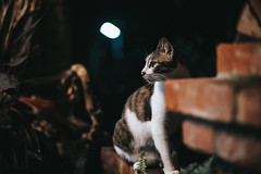 (Cat Zheng) Tags: taiwan fujifilm xseries xpro2 mitakon 35mm f095