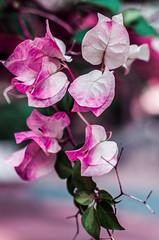 Botanical Series1 (Elena Picart) Tags: elenapavlova floralartprint interiors modern minimal flowerphotographs floralart botanicalprint flowerphotography garden spring decor naturedecor blossoms picargallery