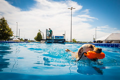 Dock Dogs (animefx) Tags: dockdogs dogshow k9 dogs dog pet pets tricks water cute animals fetch blue springfield illinois leica leicaq summer 2016
