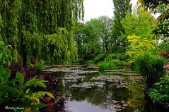 Les jardins de Monet (1) (didier95) Tags: jardindemonet giverny arbre paysage etang vert normandie monet vegetaux vegetal vegetation