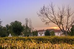 Torrecampo, Crdoba (nfaraldos) Tags: torrecampo crdoba spain espaa sunset atardecer valledelospedroches nikond7000 summer verano