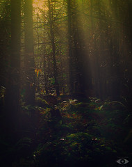 morning in the forest (http://www.grazynabudzenphotography.co.uk/) Tags: morning forest wales walk landscape landscapeseascape light seascape southwales grazynaphotography nikon d5200 beauty ngc nature natura