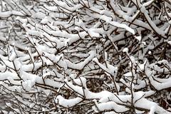 Snow HDR (Ivan Naurholm. thanks, for more than 500.000 views) Tags: winter white snow cold copenhagen denmark vinter amazing interesting pattern dof bokeh branches danmark depth kbenhavn 2012 sne kulde koldt