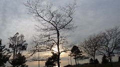 P1220032 (aprm718_3) Tags: nyc trees sunset sky brooklyn clouds campus landscape kingsborough amateurphotography anthonymcnallyphotography aprm718