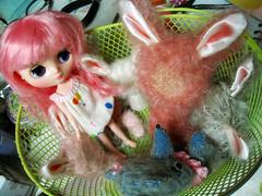 Wait!!! Who's THAT??? (violetpie) Tags: bunnies wip blythe newgirl middie