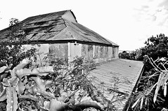 BALLROOM SHED (Darkroom Daze) Tags: roof building abandoned neglect decay neglected ruin northshore disused bermuda naval derelict abandonment decayed disuse spanishpoint britishnavy royalnavy admiraltyhouse britishroyalnavy admiraltyhousepark pembrokeparish spanishpointroad admiraltyhouseballroom