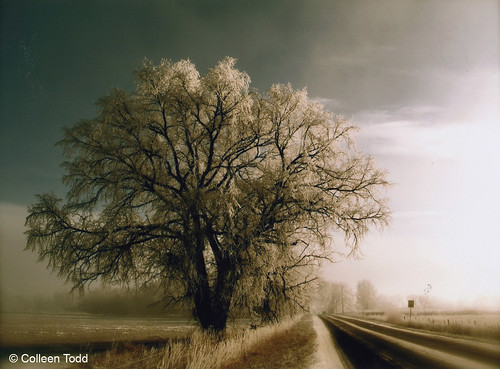 Photo - Peaceful Road